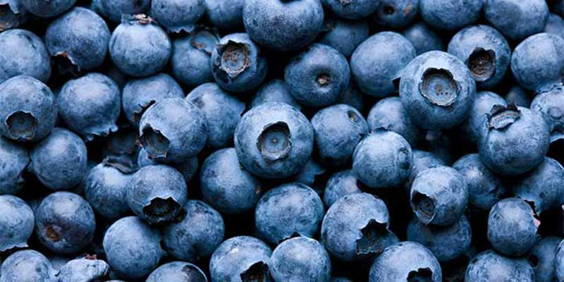 Blueberries up close